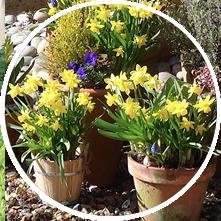 Headley Bulb Planting